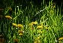 Grünes Gras...