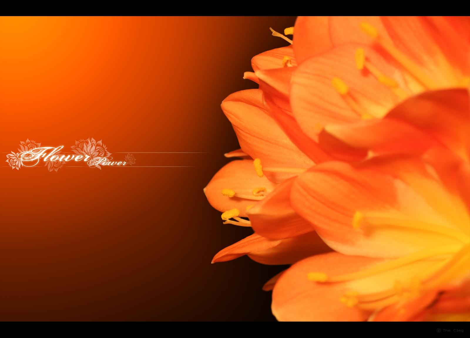 Flower v.2