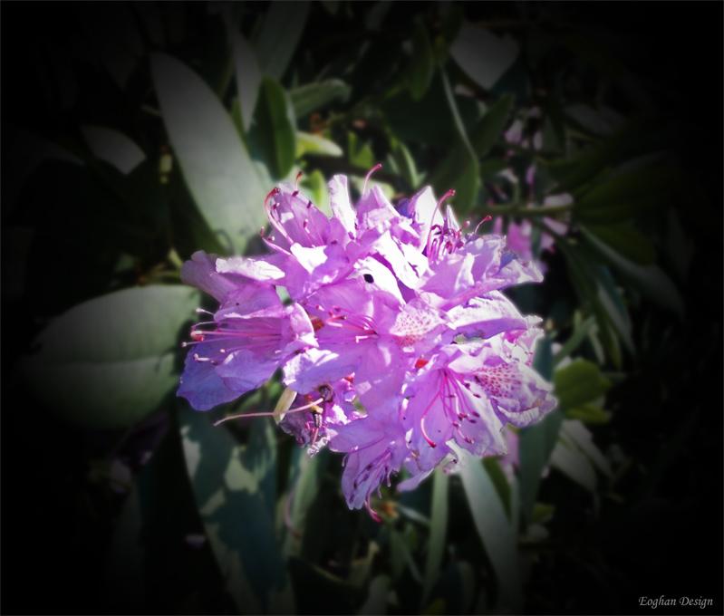 Blume eines Ehrendenkmals