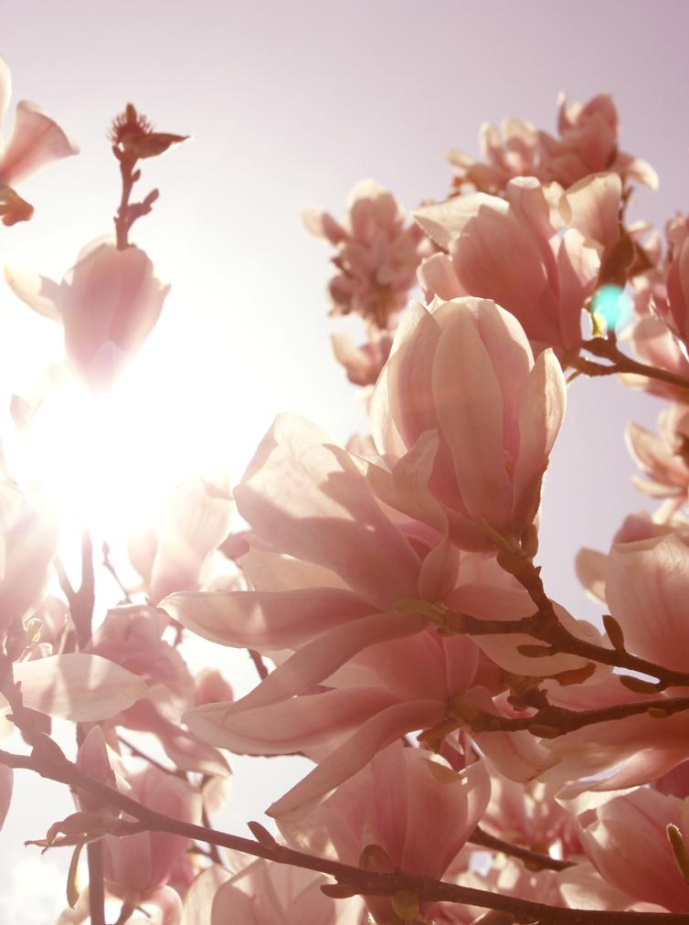 Frühling die Zweite