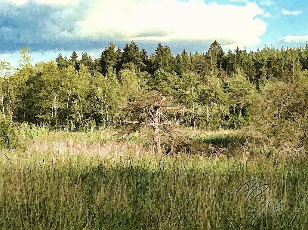 Stedtlinger Moor 1