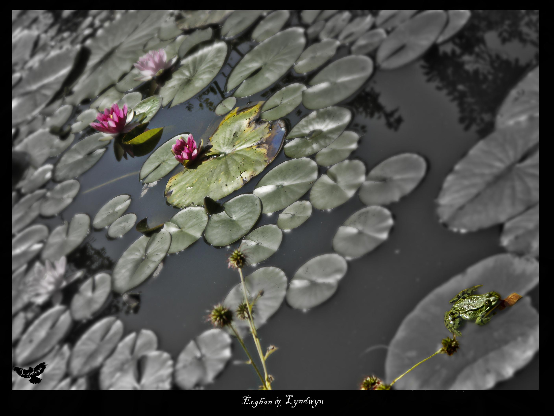 Ein Teich mit vielem verborgenen Motiven