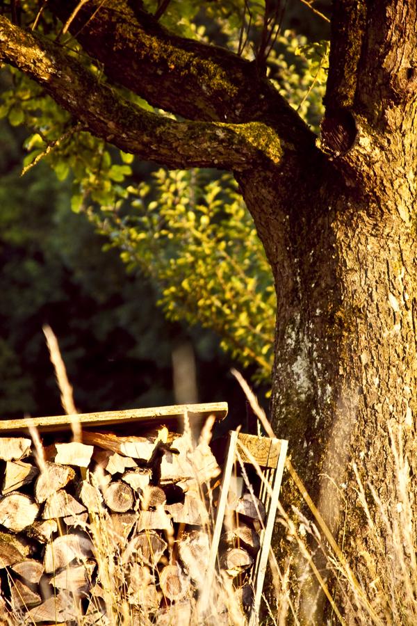 Holz Kreislauf