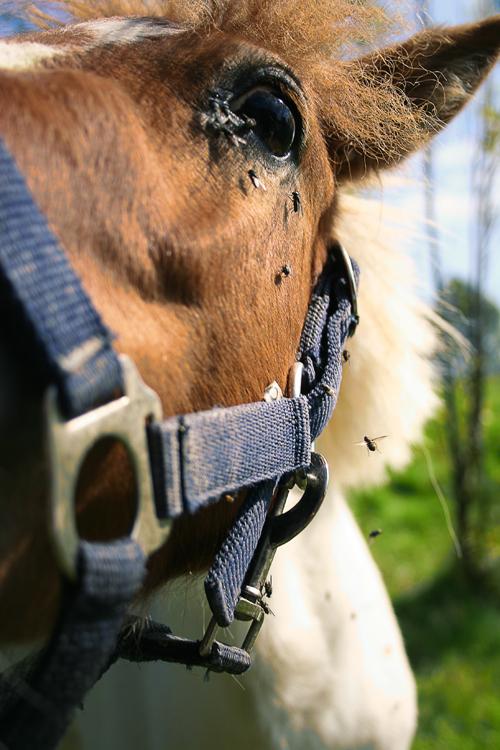 Pferd versus Pfliege ^^