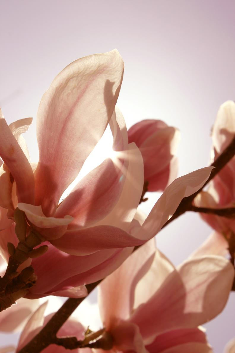 Frühling (4 Fotos)